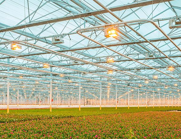 entramado de tubos blancos en el techo encima de unas flores