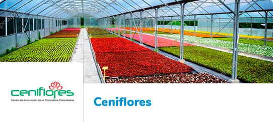 Ceniflores